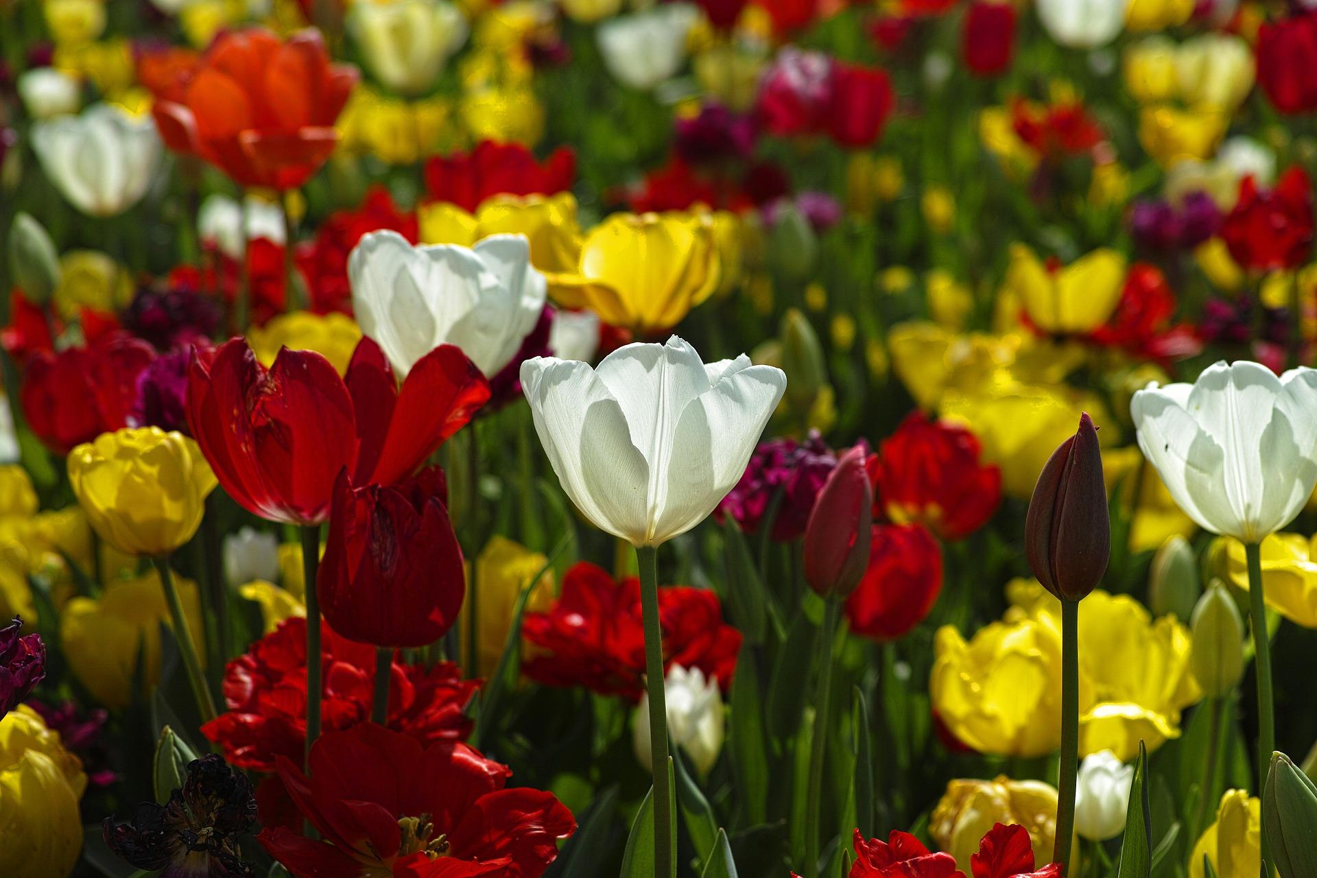 C mo y cu ndo plantar flores de jard n mi jard n - Arboles y plantas de jardin ...