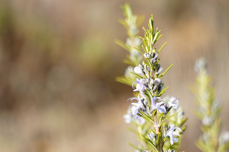 C mo y cu ndo plantar plantas arom ticas mi jard n - Plantar plantas aromaticas ...