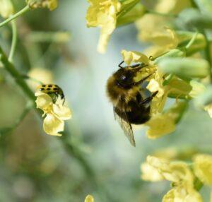 escarabajo y abeja
