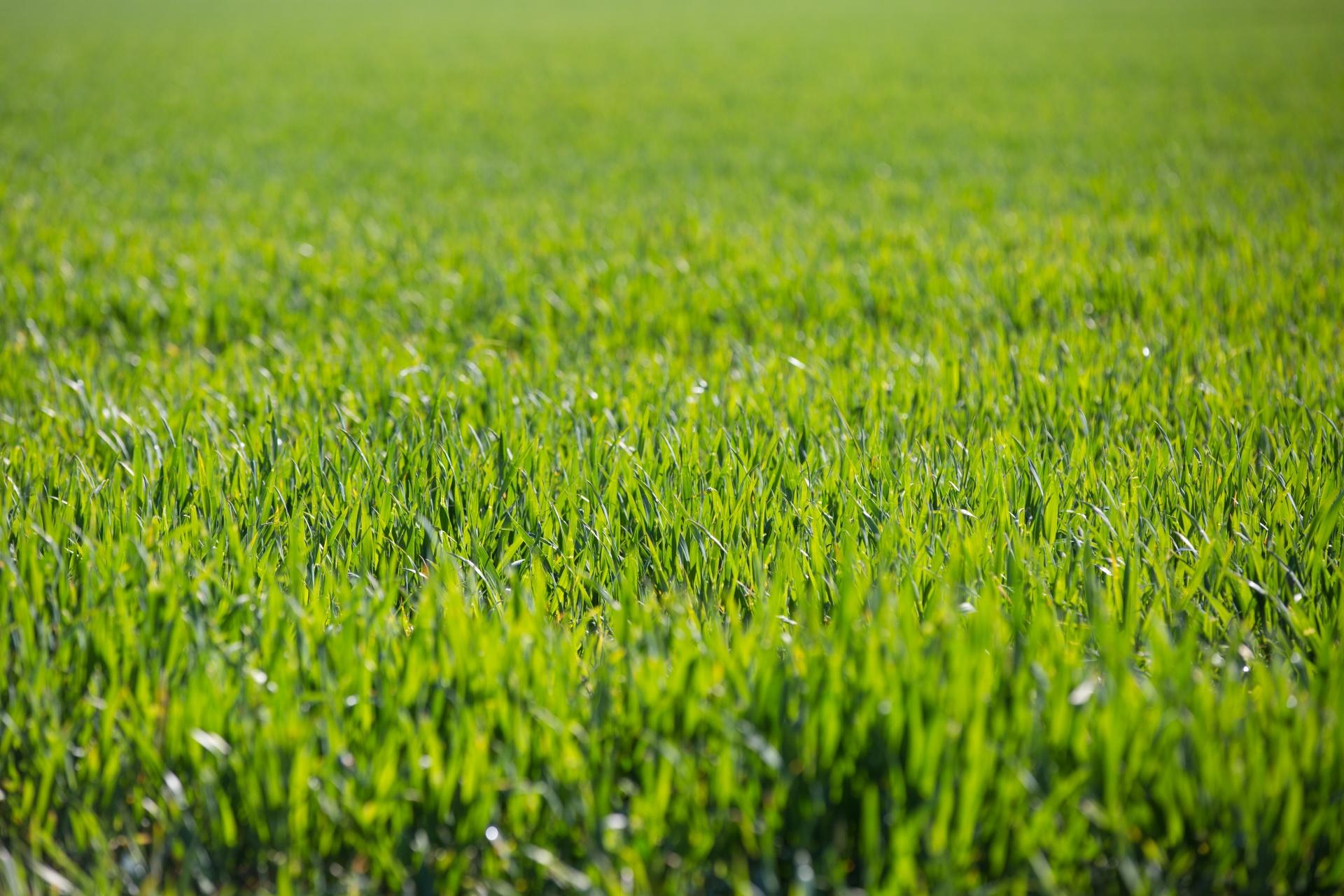 Cesped fertilizante para césped, ¿qué es y cuál usar? - mi jardín