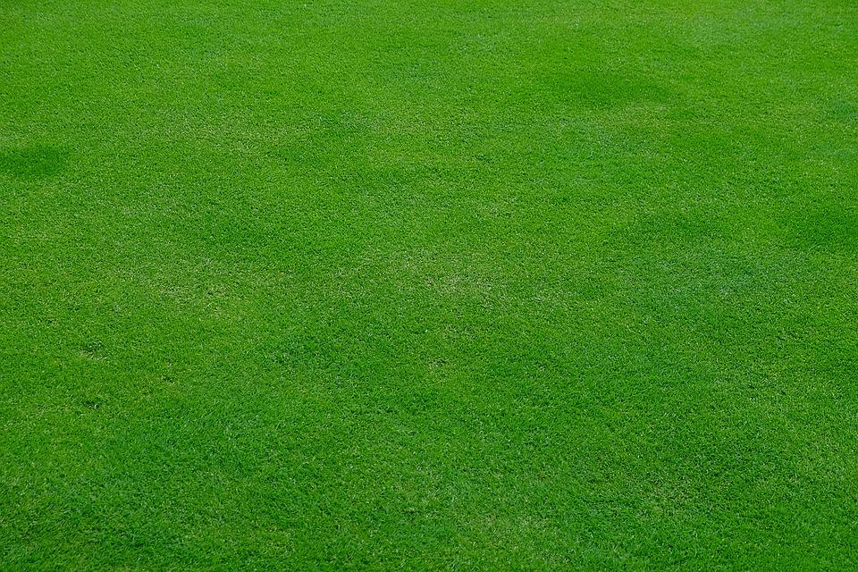 Cesped qué es el césped inglés, qué usos tiene y cómo cuidarlo? - mi jardín