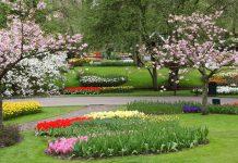 jardin en primavera